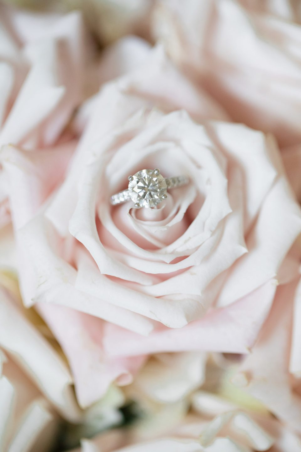 Ashley Mac Photographs captures wedding ring in flower
