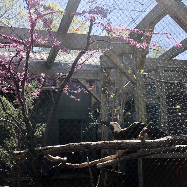 stl zoo