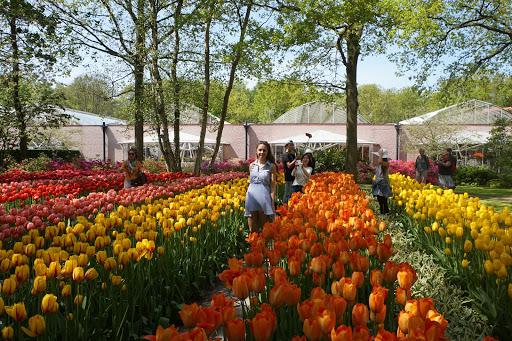 Day Trips from Amsterdam; Keukenhof Tulip Garden