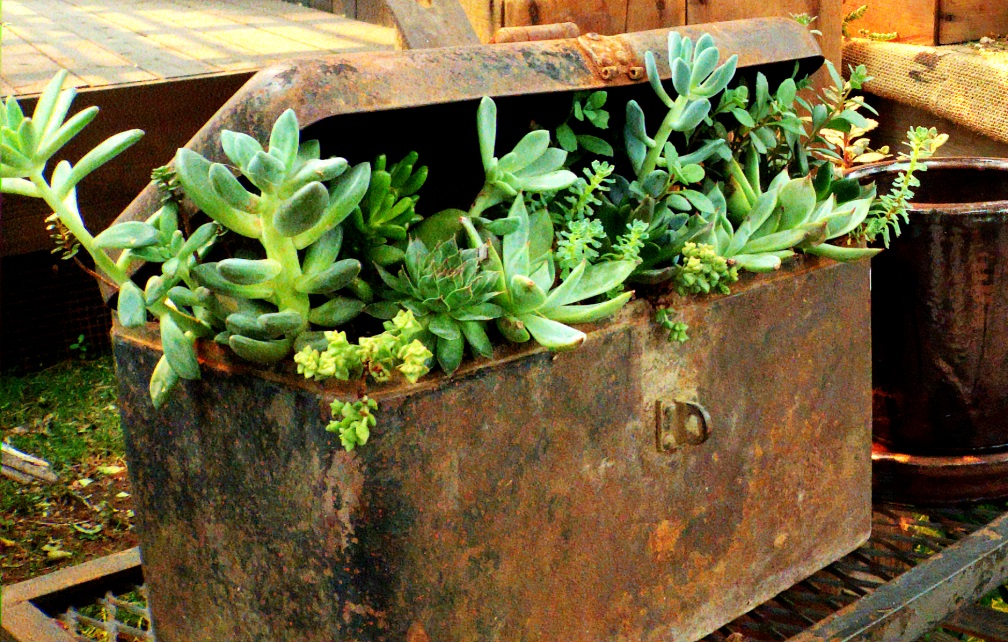 Overwintering Containerized Plants