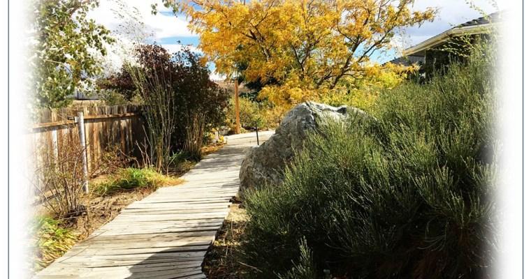 Local Gardening Volunteer Grows Beyond Spinal Injury