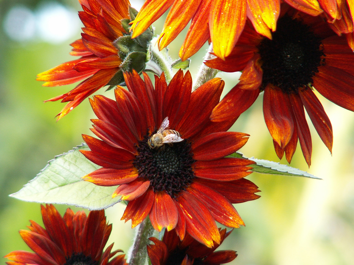 Learn about the Birds and the Bees to Boost Garden Yields