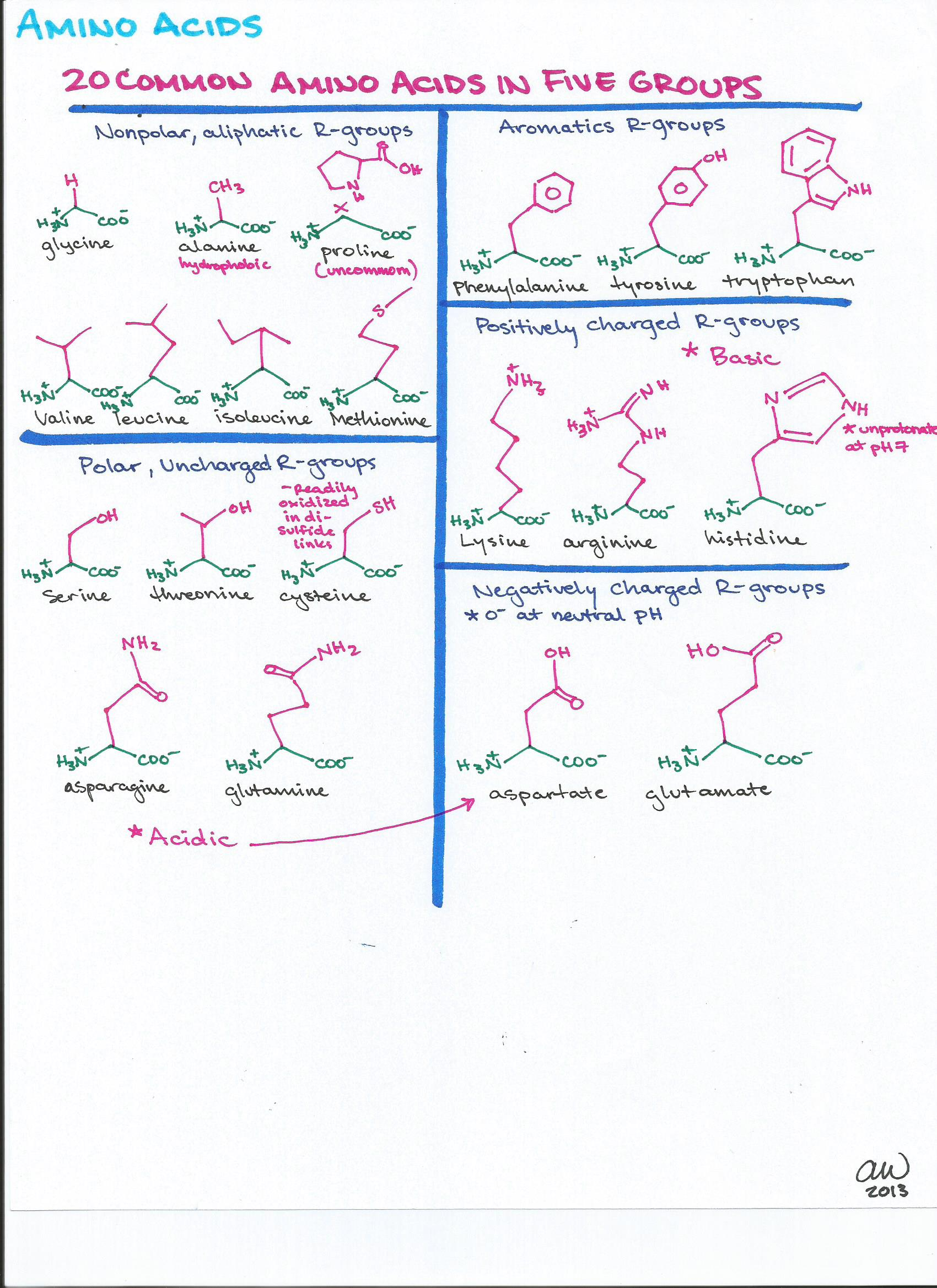 Study Guides Amino Acids And Study