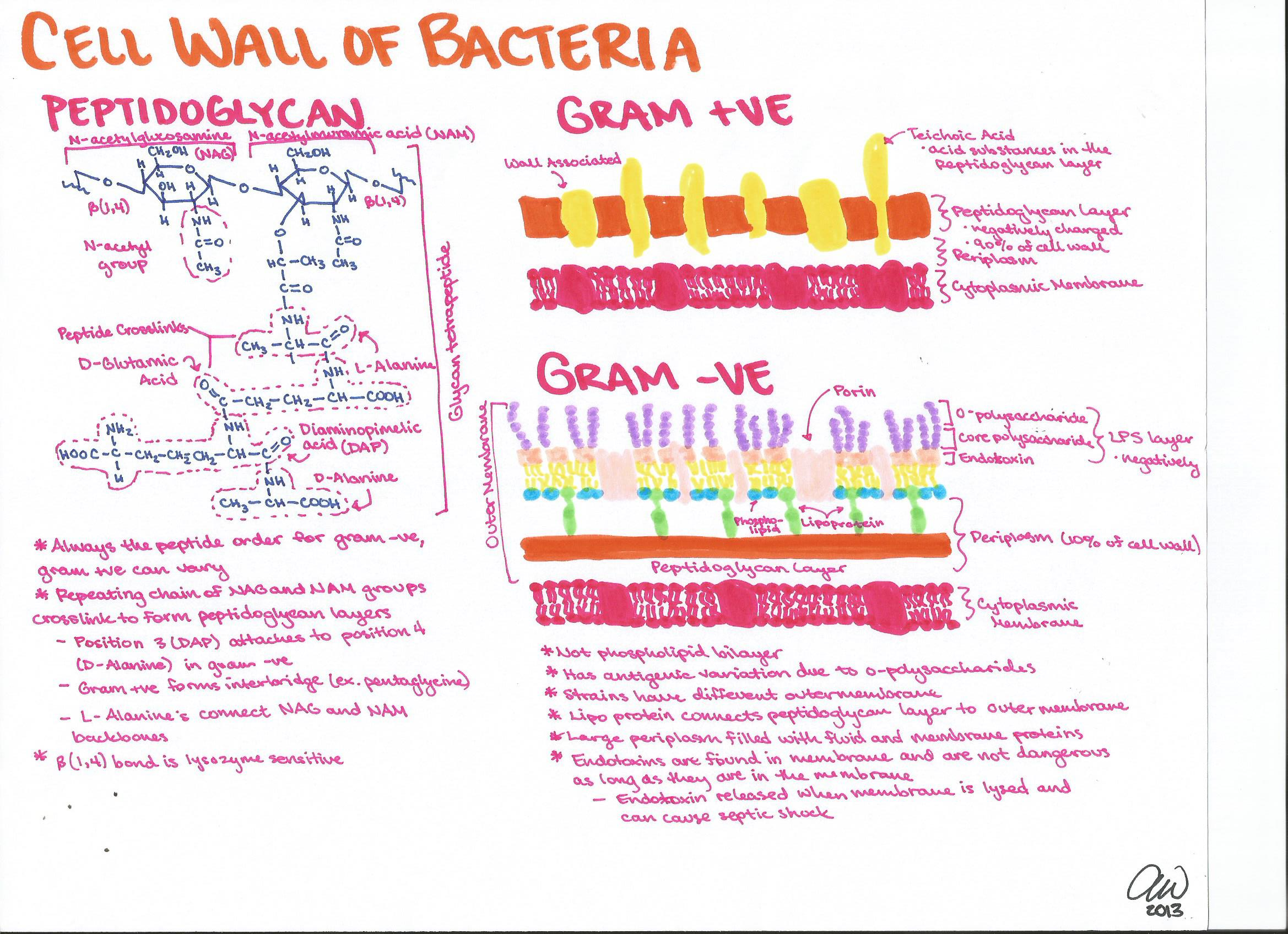 Microbiology Study Guides