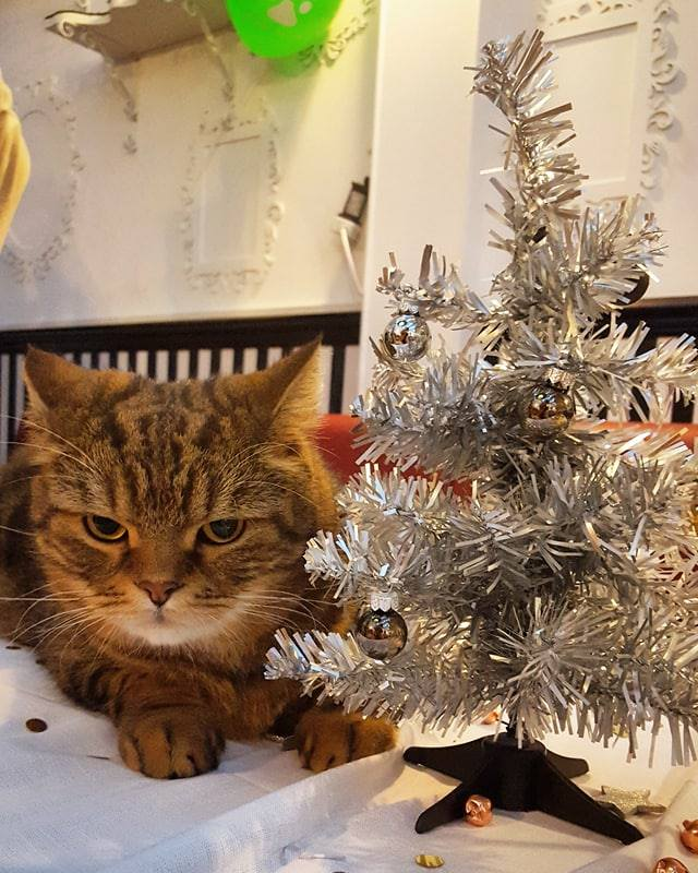 Crafting and Cats: Christmas Special