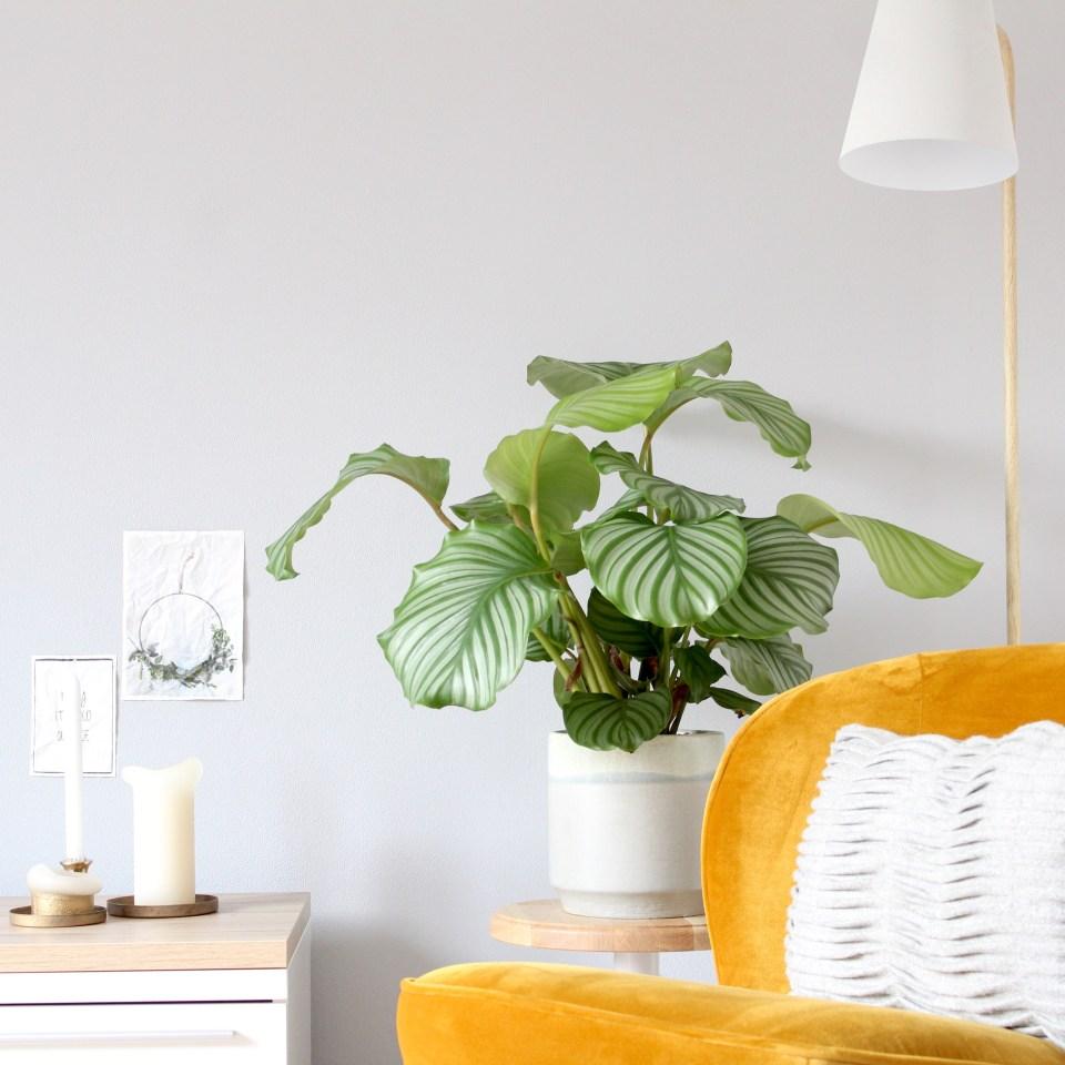 INTERIEUR | Nieuw in huis
