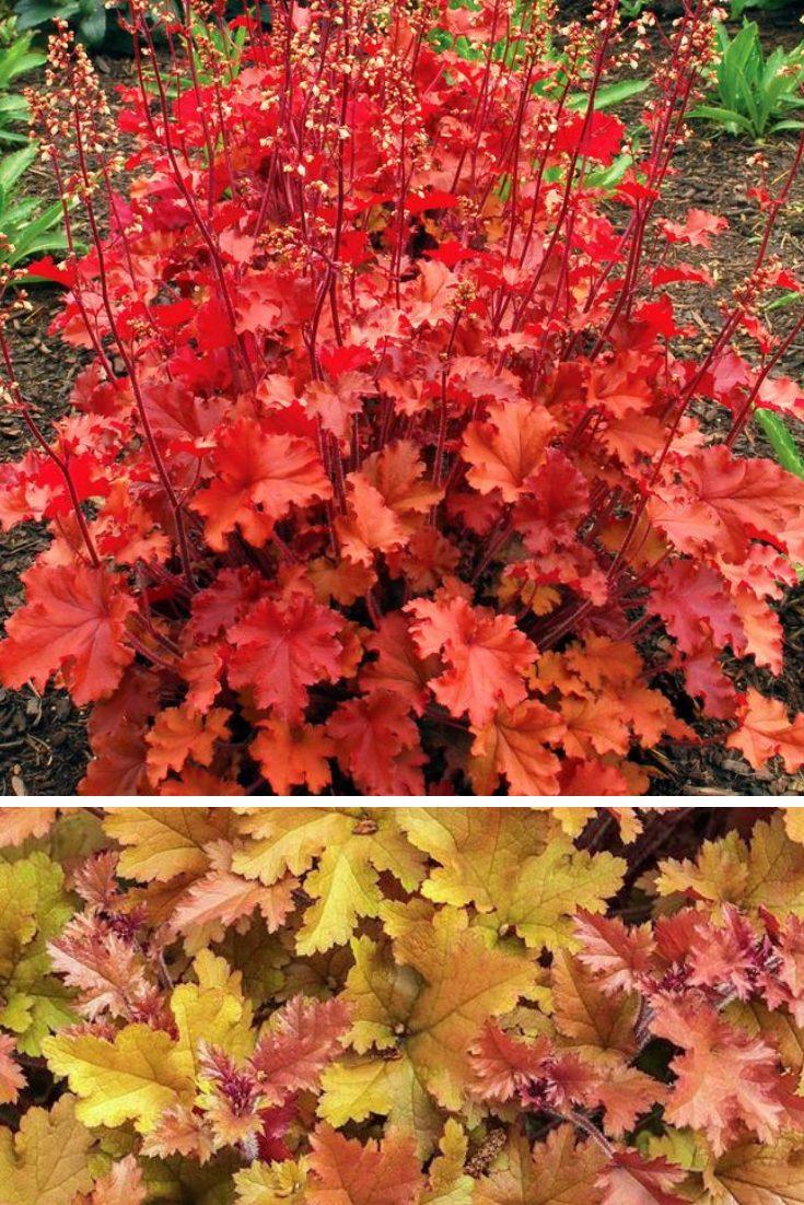 colorful foliage ideas