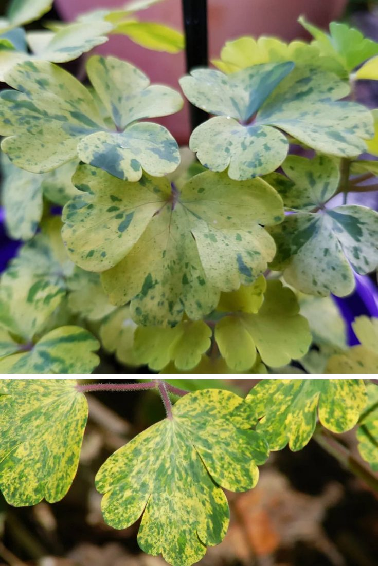 plant foliage ideas