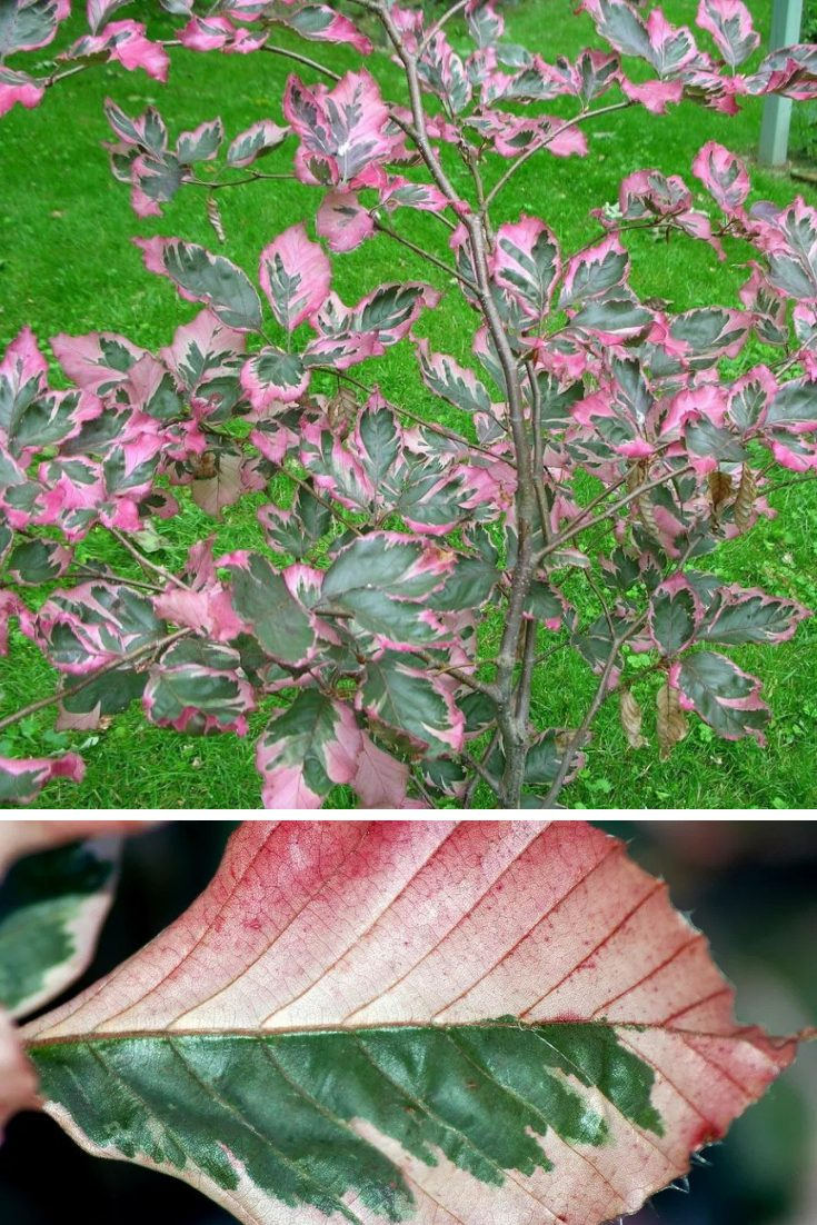 flower and foliage ideas