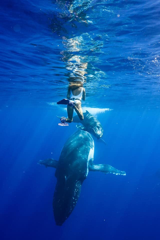 ashley swimming with humpback whales