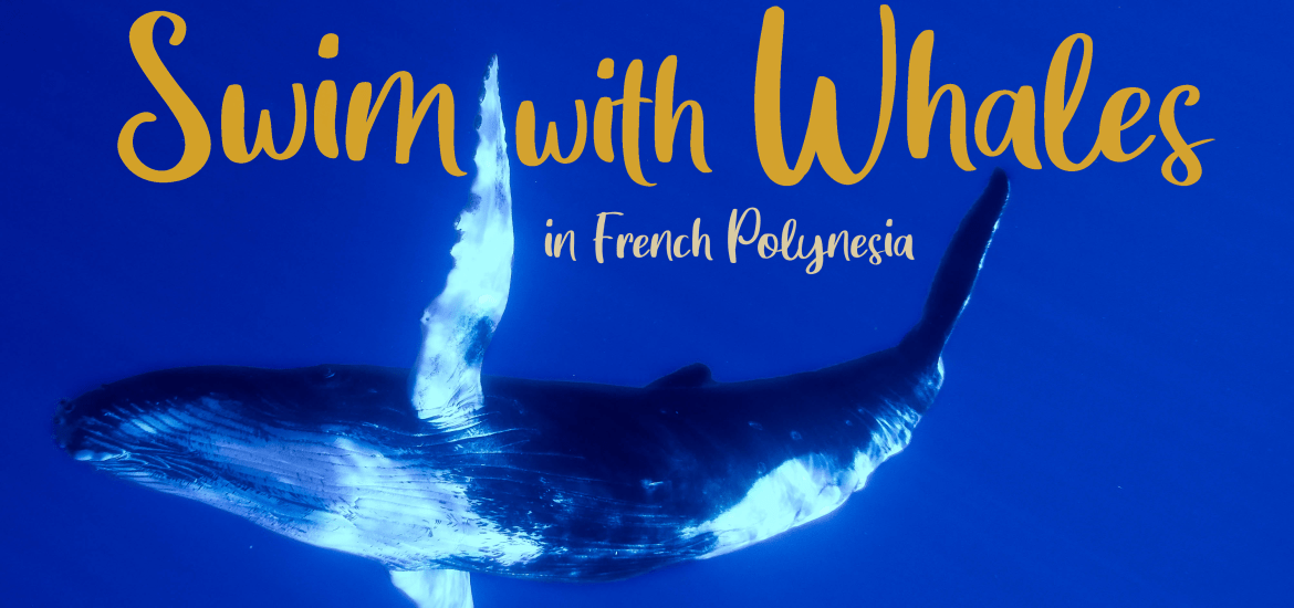 swim with whales in French polynesia