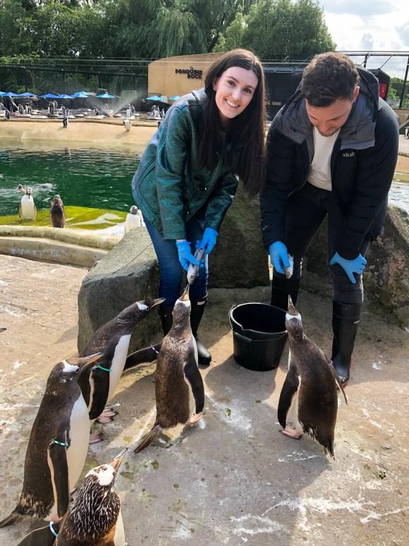 Penguin Feeding Edinburgh Zoo