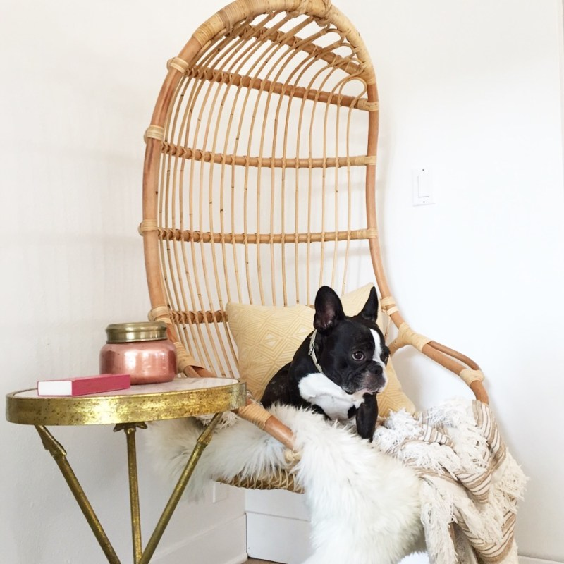 ratan hanging chair and french bulldog