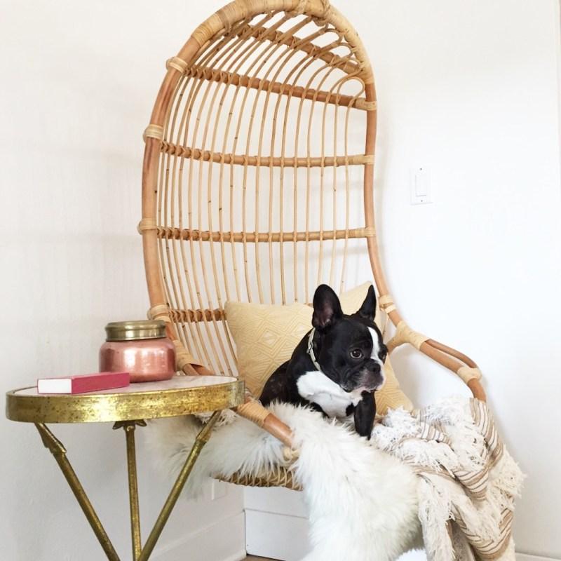 ratan hanging chair and french bulldog