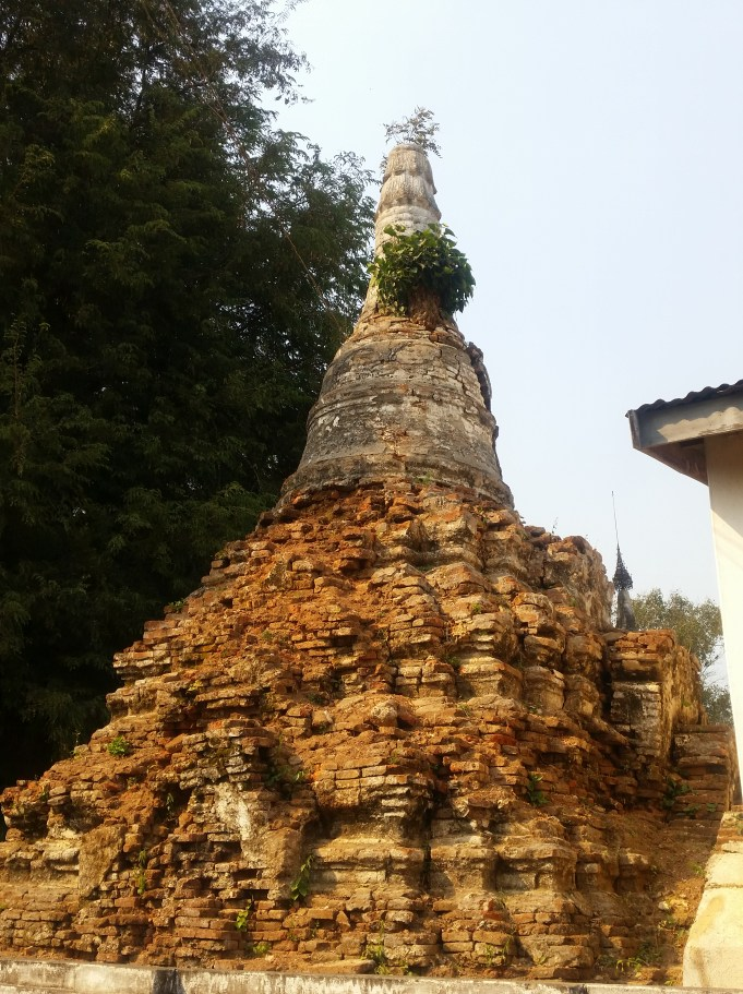 Old stupa with a tree growing out of it.
