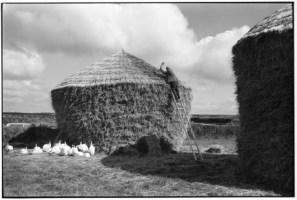 Bill Hammond thatching a rick, Westacott, Riddlecombe, Devon, 1986. Copyright: Beaford Arts