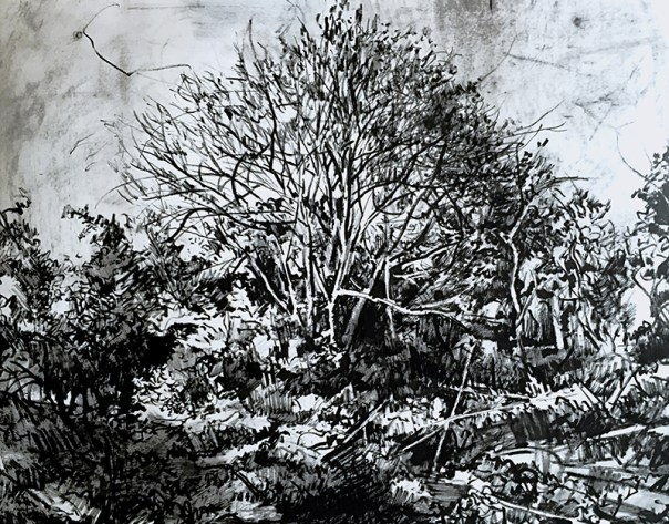 Fraser Scarfe: Study for Tree near Burton Road, 2015, pen on paper