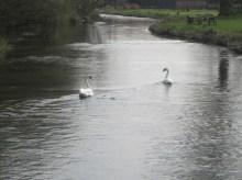 SWANY RIVER, Hampshire, April 2015