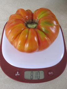 YOU SAY TOMATO, I SAY EIGHT POUNDS TEN OUNCES, August 2020