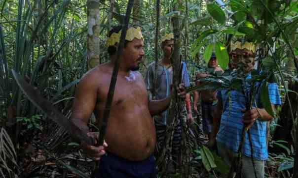 Sateré-Mawé men collect medicinal herbs to treat people showing Covid symptoms, in a rural area west of Manaus, Brazil. Photograph: Ricardo Oliveira/AFP/Getty Images