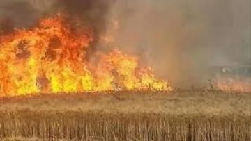 Photo of 600 دونم زراعي ضحية الحرائق والدفاع المدني يكشف الأسباب