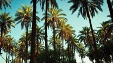 Photo of مجلس الوزراء يوافق على مشروع قانون الاستملاك العيني للأراضي والبساتين الواقعة ضمن التصميم الاساسي