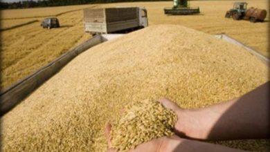 Photo of كربلاء المقدسة تسوق 4 الاف طن من محصول الحنطة لغاية الان