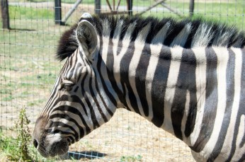 I'm not going to lie. I discovered zebras are assholes that try and bite. Don't feed zebras.