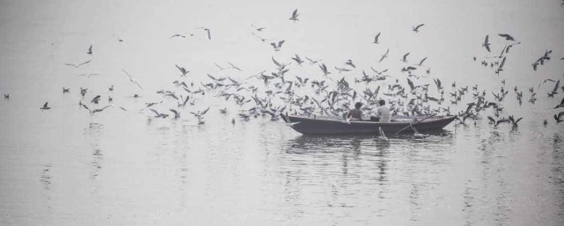 ashtanga yoga okinawa | varanasi | boat | water | birds
