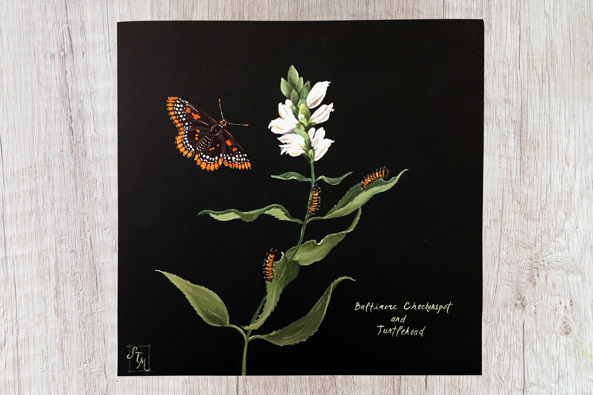 Butterfly_Illustration