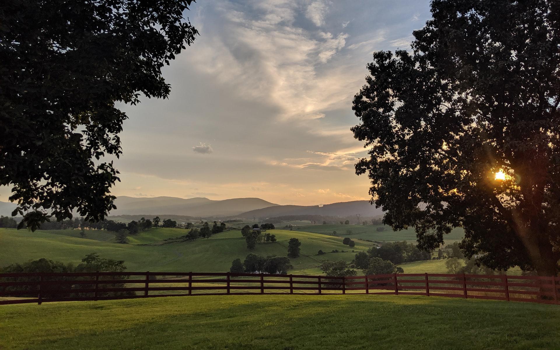 Vyne_Virginia_Landscape