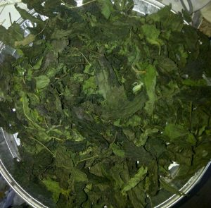 Drying Nettle