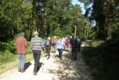 Ashurst Walks set out
