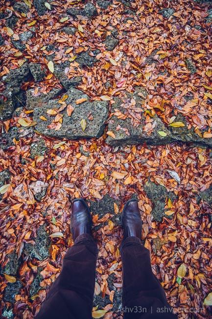 Bras D'Eau Forest Trail