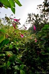 Climbing Le Pouce - Through the Bushes to the Top