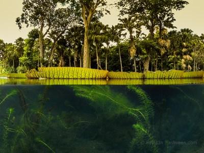 SSR Botanical Garden - Lily Pond
