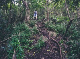 Hiking Pieter Both Mountain Mauritius - Into the woods again