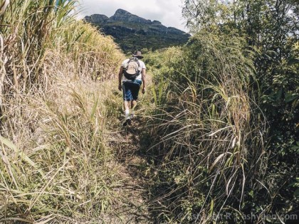 Hiking Trois Mamelles - Into Cane Fields