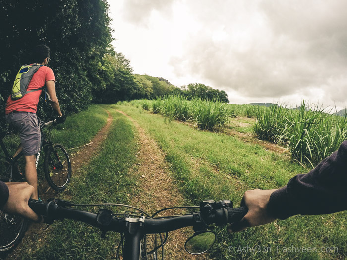 MTB Mauritius - Bassin Estate - In the Fields
