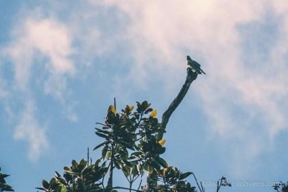 MTB Ride Macchabee Trail - Mauritius Parakeet