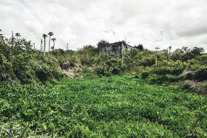 Roches Noires Wetlands Ruins