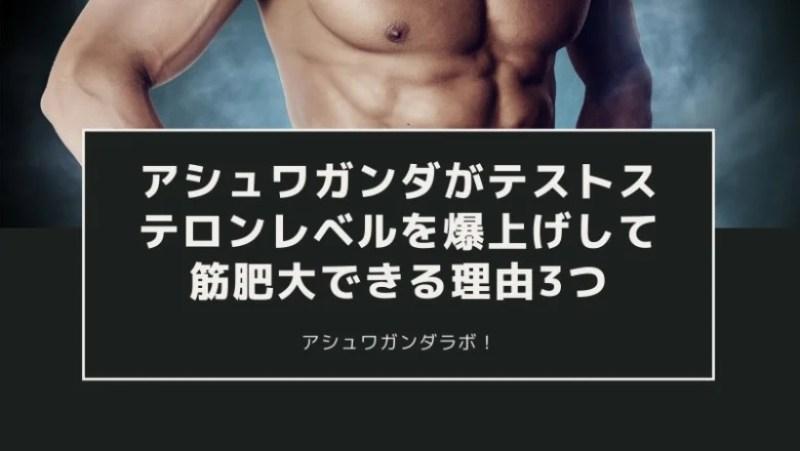 【筋トレ】アシュワガンダがテストステロンレベルを爆上げして筋肥大できる理由3つ (1)