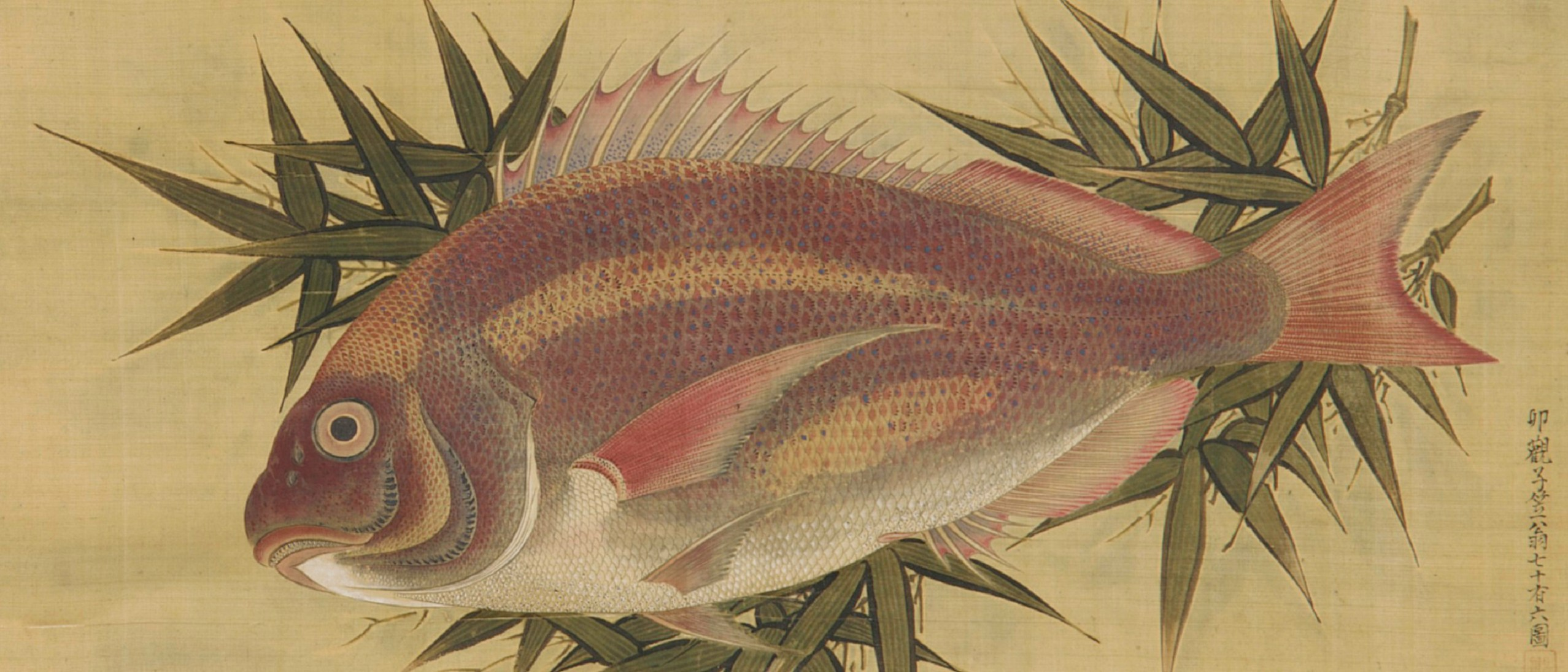 Detail image, Red Sea Bream (Tai) on Bamboo Leaves by Ogawa Ritsu (1663–1747), Japan, Edo period, 1738, Hanging scroll; ink, color, and gold on silk, Gift of Charles Lang Freer, F1897.30