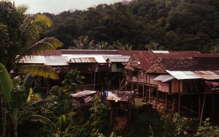 Roofs of huts and longhouses amidst tropical forest.