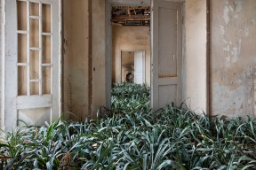 Plants between a doorway