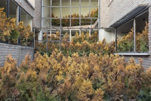 Yellowing evergreen trees fill a courtyard and upstairs hallways.