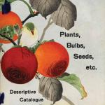 Front cover of the 1914-1915 Descriptive Catalogue of the Yokohama Nursery Co, Ltd. The Yokohama Nursery Co at this time had offices in Japan, London, New York and Shanghai. Their bulbs and plants were shipped worldwide from the nurseries in Japan
