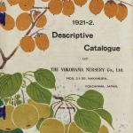 Front cover of the 1921-2 Descriptive Catalogue of the Yokohama Nursery Co, Ltd. The plants are named on the illustration as 'Diospyros lotus' and 'Pyrus serotina'