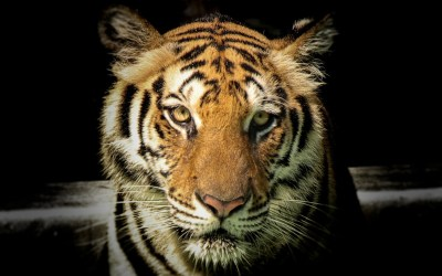 Key Benefits of Tiger Balm