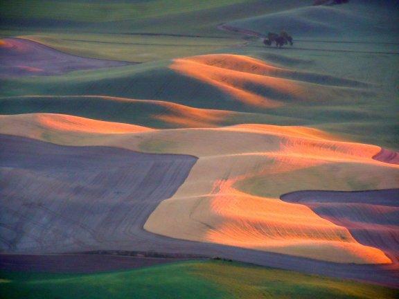 夕陽光影下, 這是麥田, 不是油畫.